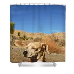 Shower Curtain featuring the photograph Headache by Angela J Wright