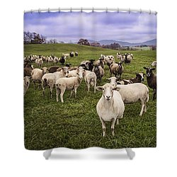 Shower Curtain featuring the photograph Hear My Voise by Jaki Miller