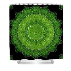 Heart Of Poplar Shower Curtain by Aliceann Carlton