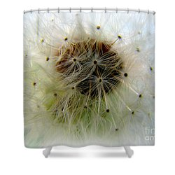 Heart Of The Dandilion Shower Curtain
