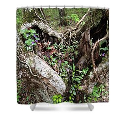 Shower Curtain featuring the photograph Heart-shaped Tree by Jan Dappen