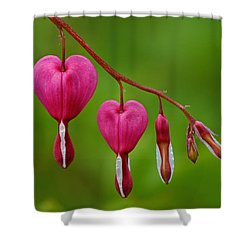 Heart String Shower Curtain