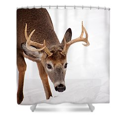 Heavy Rack Shower Curtain by Karol Livote