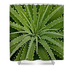 Hechtia Argentea Shower Curtain