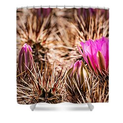 Hedgehog Cactus Flower And Buds Shower Curtain by  Onyonet  Photo Studios