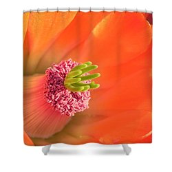 Shower Curtain featuring the photograph Hedgehog Cactus Flower by Deb Halloran