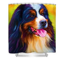 Colorful Bernese Mountain Dog Painting Shower Curtain by Michelle Wrighton