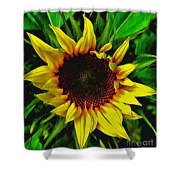 Helianthus Annus - Sunnydays Shower Curtain