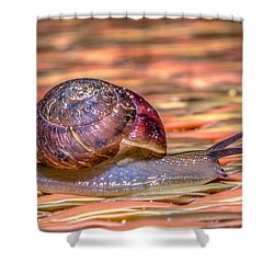 Shower Curtain featuring the photograph Helix Aspersa by Rob Sellers