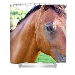Shower Curtain featuring the photograph Hello Beauty by Roselynne Broussard