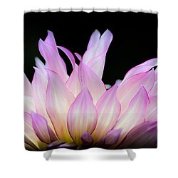 Hello Dahlia Shower Curtain by Amy Fearn