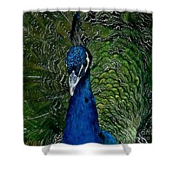 Shower Curtain featuring the photograph Hello Mr Peacock by Ruth Jolly