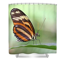 Shower Curtain featuring the photograph Hello There Long Wing by Ruth Jolly