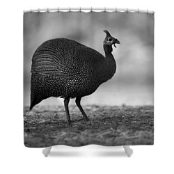 Helmeted Guineafowl Shower Curtain