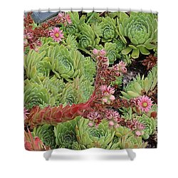 Shower Curtain featuring the photograph Hen And Chick In Bloom by Ann E Robson