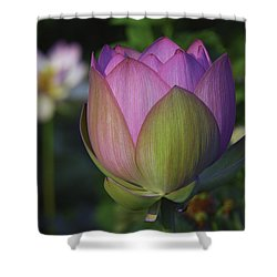 Shower Curtain featuring the photograph Her Majesty by Cindy Lark Hartman