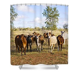 Herd Of Brahman Cattle In Outback Queensland Shower Curtain by Colin and Linda McKie