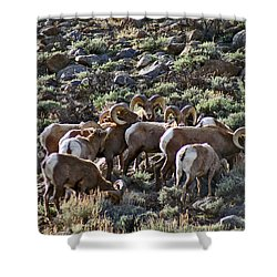 Herd Of Horns Shower Curtain by Jeremy Rhoades