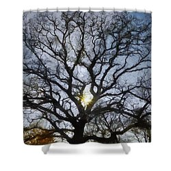 Here Comes The Sun Shower Curtain by Jeff Kolker