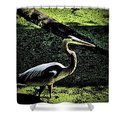 Shower Curtain featuring the photograph Here Fishy Fishy by Robert McCubbin