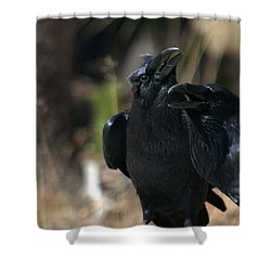 Here He Is Shower Curtain