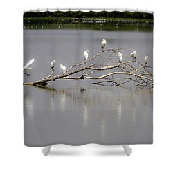 Here I Come Shower Curtain by Menachem Ganon