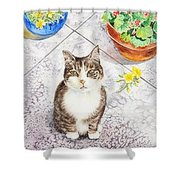Here Kitty Kitty Kitty Shower Curtain