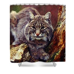 Shower Curtain featuring the digital art Here Kitty Kitty by Lianne Schneider