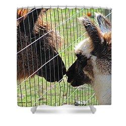 Heres A Llama Theres A Llama Shower Curtain