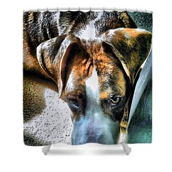 Shower Curtain featuring the photograph Here's Lookin Atchya by Robert McCubbin