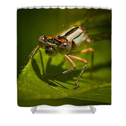 Heres Looking At You Shower Curtain by Jean Noren