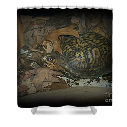Shower Curtain featuring the photograph Here's Looking At You by Sara  Raber
