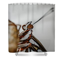 Here's Looking At You Squared Shower Curtain by TK Goforth