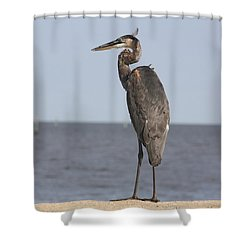 Heron Shower Curtain by Donna G Smith