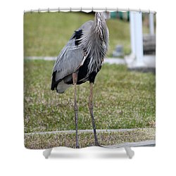 Shower Curtain featuring the photograph Heron On The Edge by Debbie Hart
