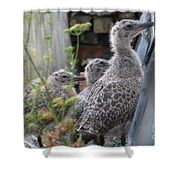 Herring Gull Chicks Shower Curtain