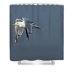 Herring Gull In Flight Shower Curtain by Karol Livote