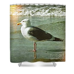 Herring Gull Watching Shower Curtain