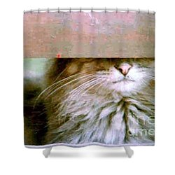 Hey Diddle Diddle Shower Curtain by Michael Hoard