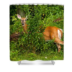Hey I Eating Here Shower Curtain by Karol Livote