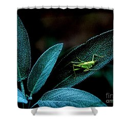 Shower Curtain featuring the photograph Hey  I'm Trying To Hide by Debra Fedchin