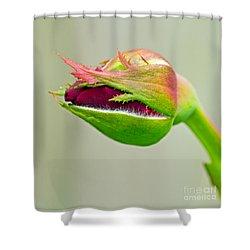 Hi Bud Shower Curtain