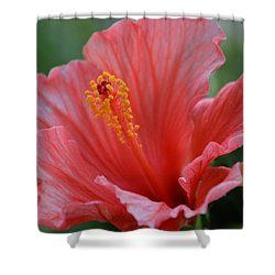 Hibiscus Beauty Shower Curtain