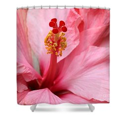 Hibiscus Flower Close Up Shower Curtain by Sabrina L Ryan