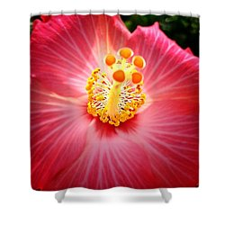 Hibiscus Highland  Shower Curtain