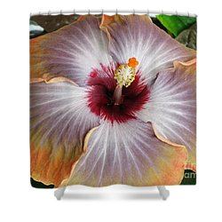 Hibiscus  Shower Curtain by Jennifer Wheatley Wolf