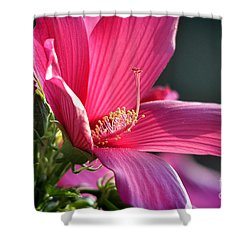 Shower Curtain featuring the photograph Hibiscus Morning Bright by Nava Thompson