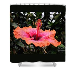 Hibiscus Orange And Pink Shower Curtain by Joseph J Stevens