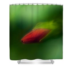 Shower Curtain featuring the photograph Hibiscus Softly 1 by Travis Burgess