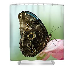 Shower Curtain featuring the photograph Hidden Beauty Of The Butterfly by Debbie Green